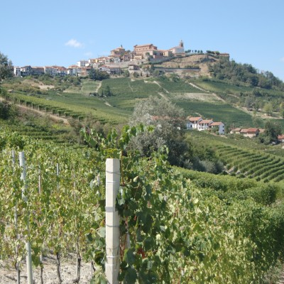 close up of vines with village on hill in background