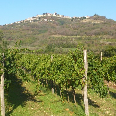 Vineyards and hilltop town in Istria