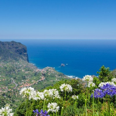Ocean view from the Levada Ribeira Frio-Portela foreground hydrangea flowers. Madeira island, Portugal.