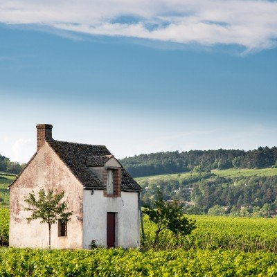 Chablis Vineyards Cycling - Short Break