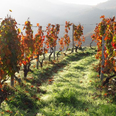Cycling in the Douro Valley