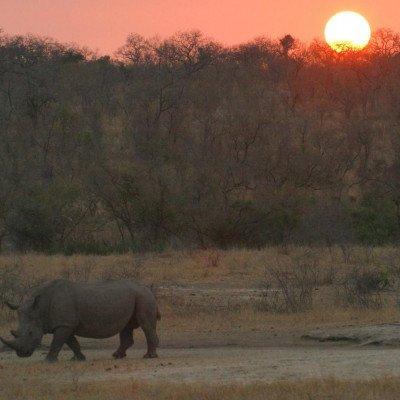South Africa - Walking & Wildlife