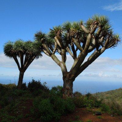 Walking the Trails of La Palma